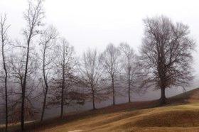 Árvores-Despidas-300x186